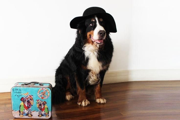 O que você precisa saber para viajar com o pet?
