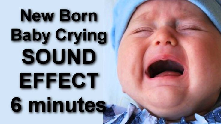 Get You Cat and Dog use to a  Baby Crying  6 minuntes SOUND EFFECT