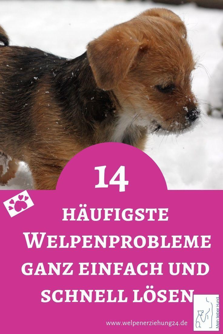 Das Total Andere Welpenbuch Endlich Da Welpen Hunde Welpen