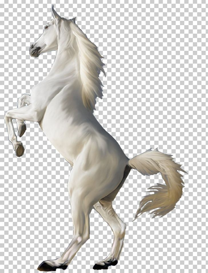 Horse Png Horse Studio Background Images Background For Photography Light Background Images