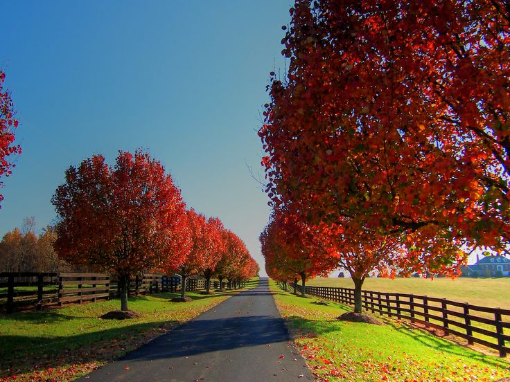 Bradford Lane Actually, this is a private driveway lined with the autumn color of Bradford Pear trees. Taken on a back road in the Blue R...