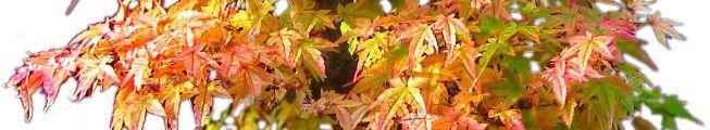 Bonsai growing tips