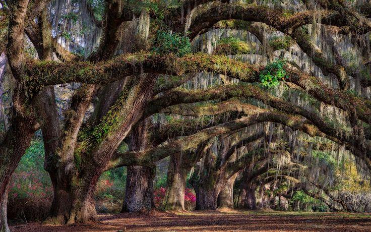 South Carolina, Charleston, USA, Bäume, Frühling Wallpaper – 1920×1200