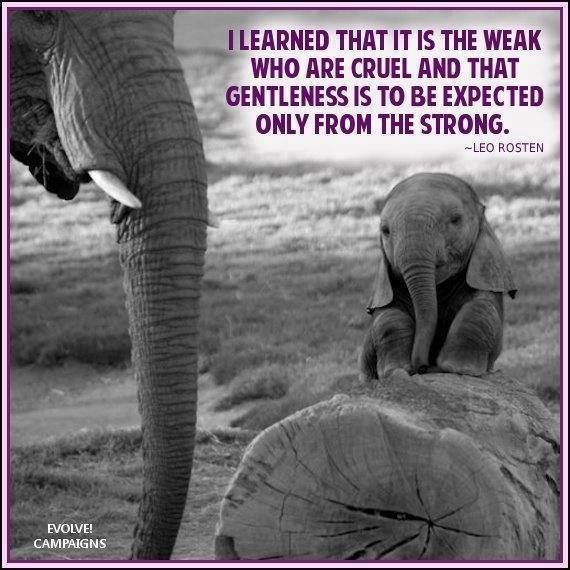 Famous Animal Rights Quotes: Animal Cruelty Quotes Suffering. QuotesGram