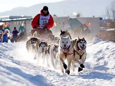 Iditarod, Sunday March 2.  Hope they get some snow or it will be Muditarod.  I was there last year and there was an abundance of snow and cold and the excitement warmed your heart but not your toes.  Love the dogs!    Greatest race on earth.    http://susanhomesforsale.com    Alaska's Iditarod Begins Sunday, March 2   Free Alaska Guide on http://www.moneysavingmadness.com