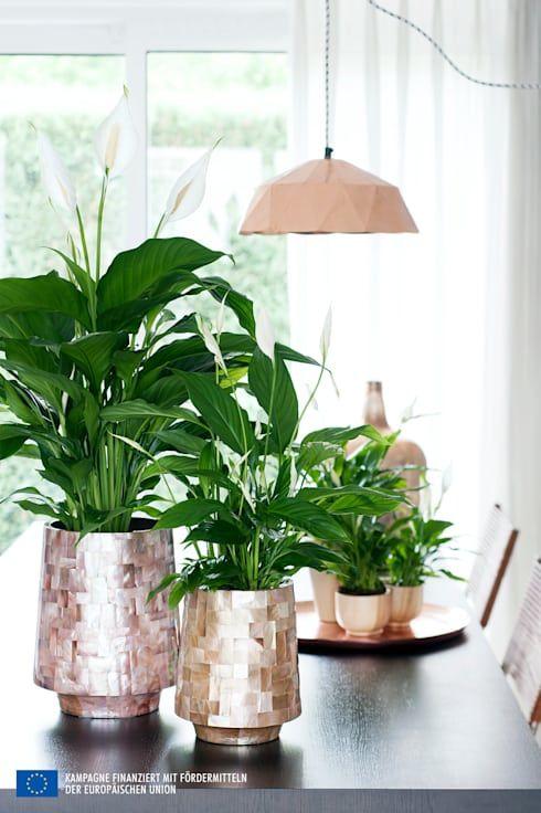 Zimmerpflanzen Fur Das Richtige Klima Pflanzen Und Blumen Sind Die