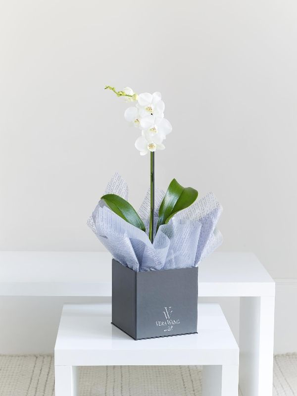 A picture of true sophistication, this chic phalaenopsis orchid is simply stunning. The crisp white flowers look so elegant with the glossy green of the leaves, and the black  cube container is the perfect way to complete this exquisite Vera Wang gift.