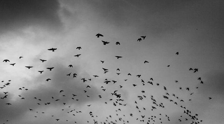 Kıbrıs Kuş Gözlemciliği