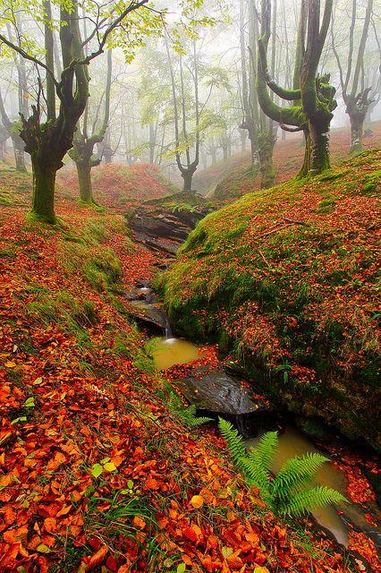 Finalmente.. La Niebla (Finally... The Mist) by Silvia and Juan, via Flickr. Gorbea, Spain