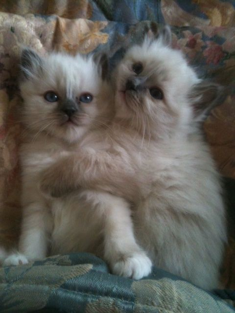 These 2 kitties are over the top cute.