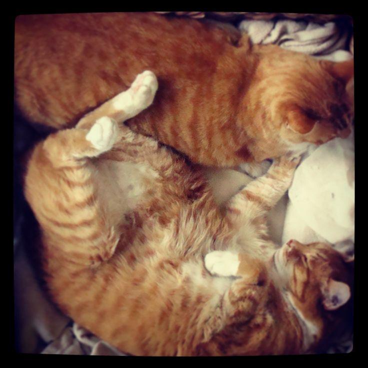 Fat cats.