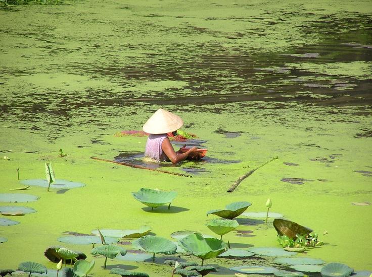 Destination Vietnam: Hue and the Perfume River http://viaggi.asiatica.com/