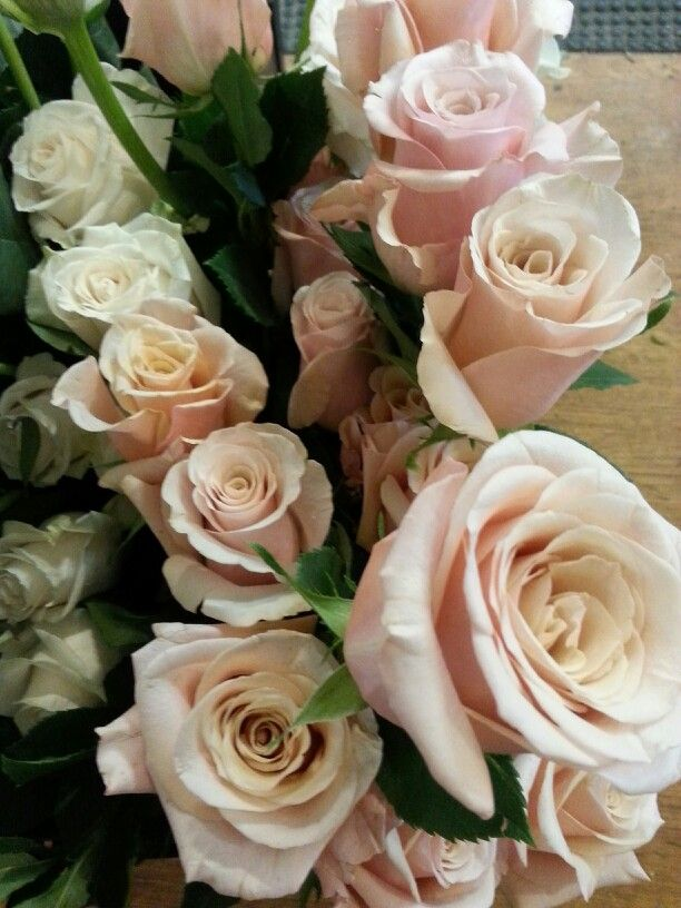Mother of Pearl Roses -- My new favorite roses.