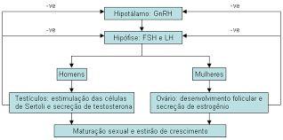 ESTATURA BAIXA: CONVERSANDO COM O ESPECIALISTA ENDOCRINOLOGISTA E NEUROENDOCRINOLOGISTA. : BAIXA ESTATURA: ENDOCRINOLOGIA E NEUROENDOCRINOLOG...