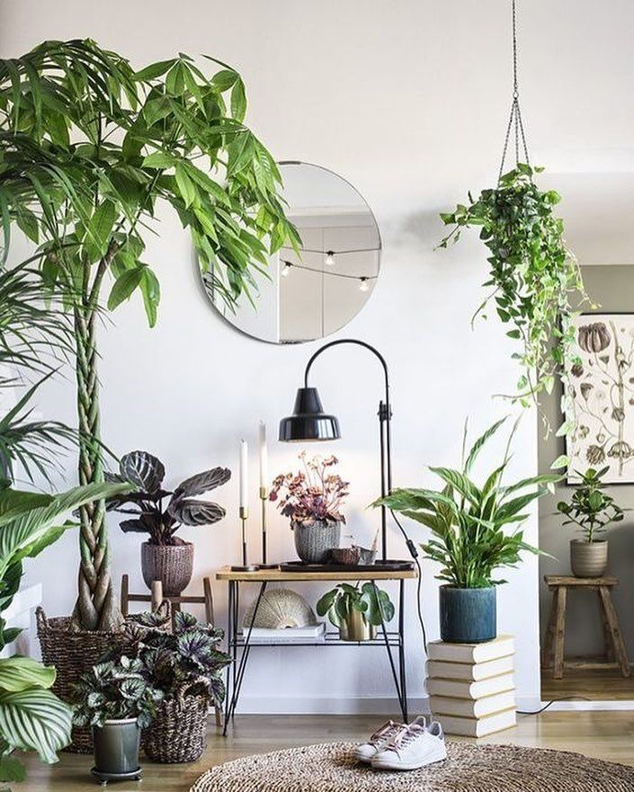 фото квартир с растениями процессе нагревания свежего