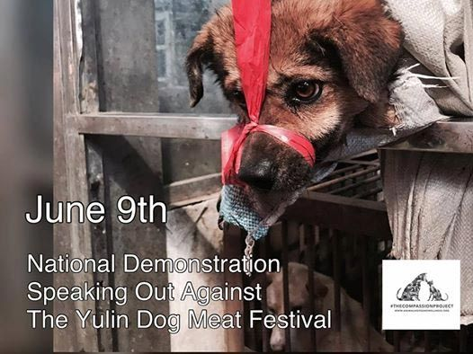 "On May 17, 2017 The Humane Society of the United States announced, with great fanfare, BREAKING: Dog meat sales banned at China's Yulin festival in milestone victory to end brutal mass slaughter of dogs. After years of pressure from activists, celebrities and a petition signed by 11 million people, the Government of China had finally backed down and agreed to end the pathetically named Yulin Dog ""Festival"".  Days later, dog lovers all over the world awoke to Outrage as sick Yulin Dog Meat…"