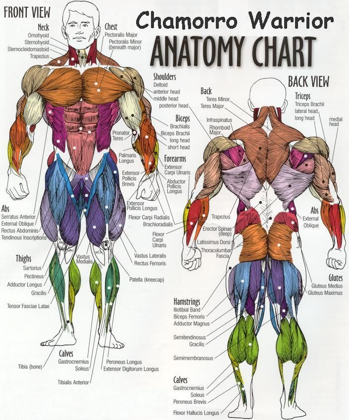 17 best Body works images on Pinterest | The human body, Human body ...