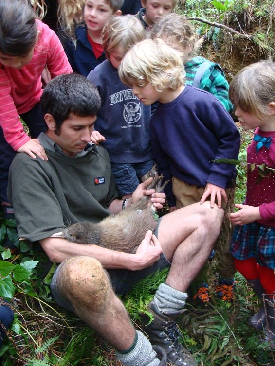 Whangarei #docgovtnz ranger Rolf Fuchs giving 'Fudge' the kiwi a health check. Students from the local Purua School went along to see a kiwi in the wild. #nzbirds