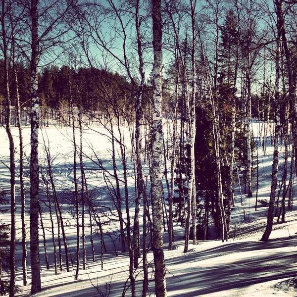Wälder und Seen in Schwedisch Lappland