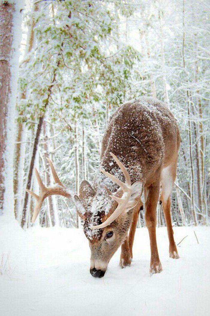 foto de Image fond d ecran gratuit paysage wallpaper neige (With images ...