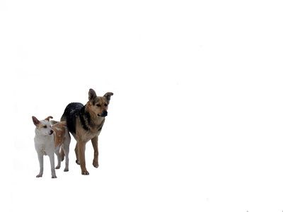 Cómo vender ropa para perros   eHow en Español
