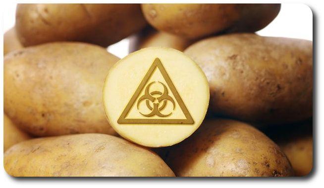 """- Два года мы опрыскивали ГМО-химикатами колорадского жука. На третий год жук уже сам нам помогал окучивать картошку.  Помните: """"что вы едите из того и состоите""""  ✔Семинар или консультации по здоровому питанию: ☎: 8-916-621-62-02  Skype: dok88008  ✉: atlasorg@yandex.ru  Ватсап или Вайбер: 8-926-599-76-70 Сергей Смоляков  Сайт: http://atlas-prof.ru  #гмо #питание #здоровье"""