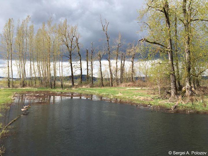 Between rains; WA USA. Перерыв в дожде; штат Вашингтон США.
