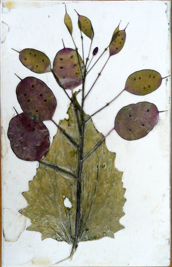 Collagraph plate; honesty pods and leaf