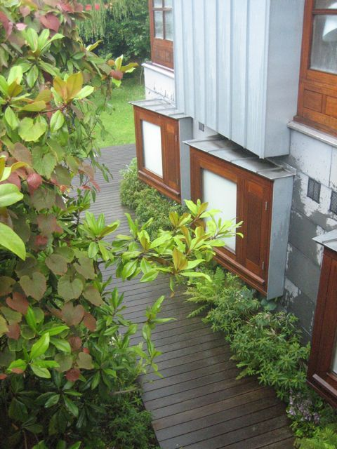 Garden Ideas Dublin 58 best plants and garden in dublin and ireland. images on