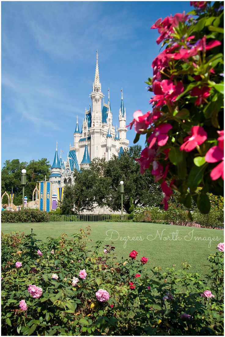 Weddings at disney parks and resorts - Find This Pin And More On Dni Disney Parks Resorts