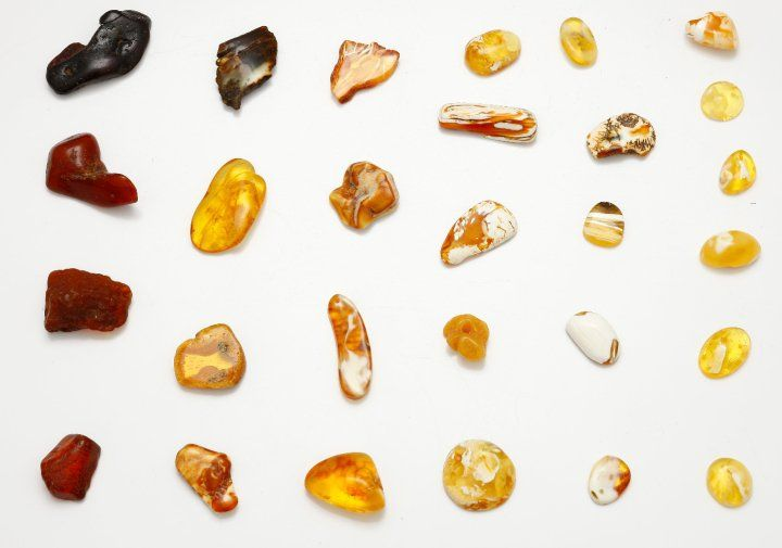 Different types of Baltic amber
