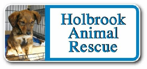HolbrookRescueCats