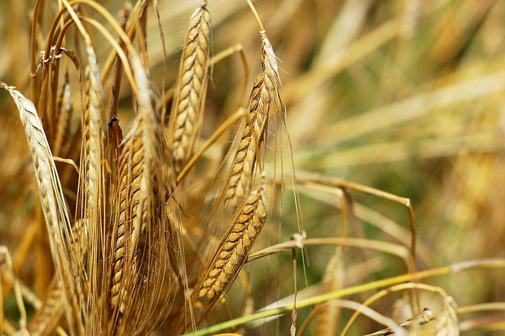 La escasez de alimentos será el problema más grave a mitad de siglo