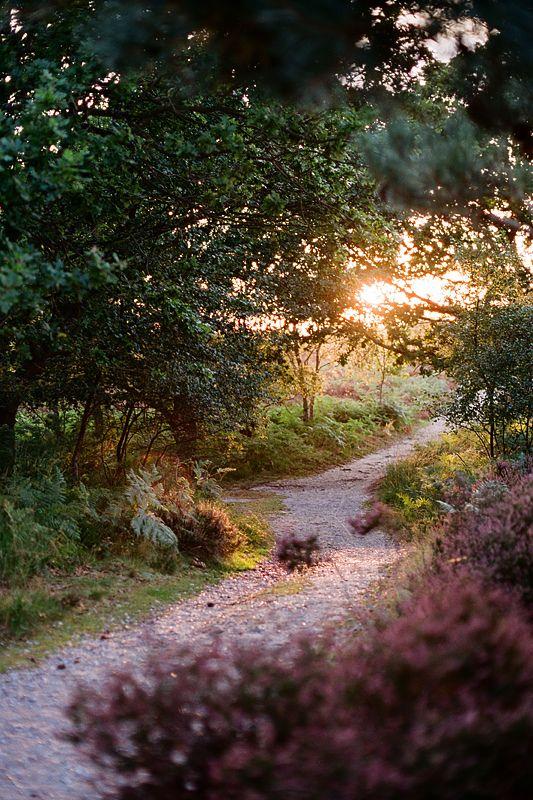 ~Sunset Forest Path, Suffolk, England~