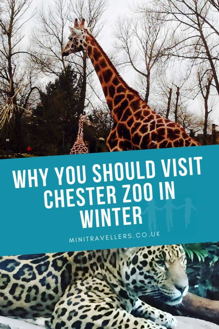 Why You Should Visit Chester Zoo In Winter With Images Chester
