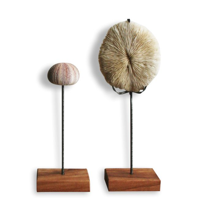 Oursin monté sur socle - Pierre et matériau précieux - Multicolor - Bon état - Ethnique