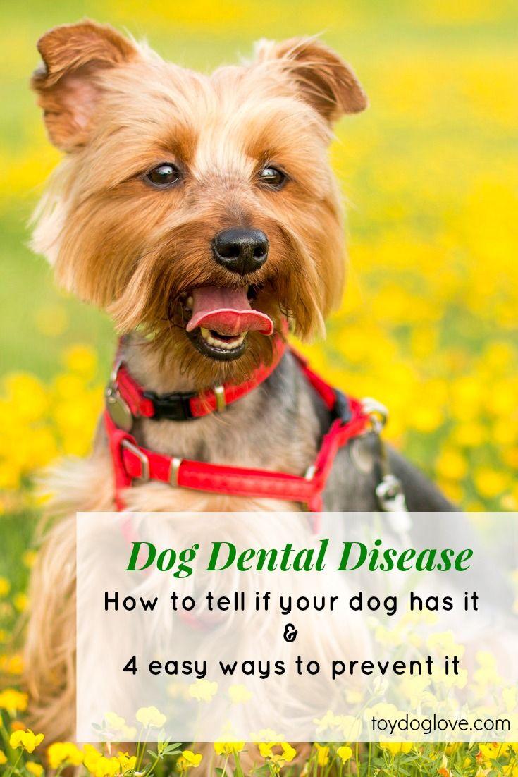 Dog Oral Health Tips - Keeping dog teeth healthy and clean