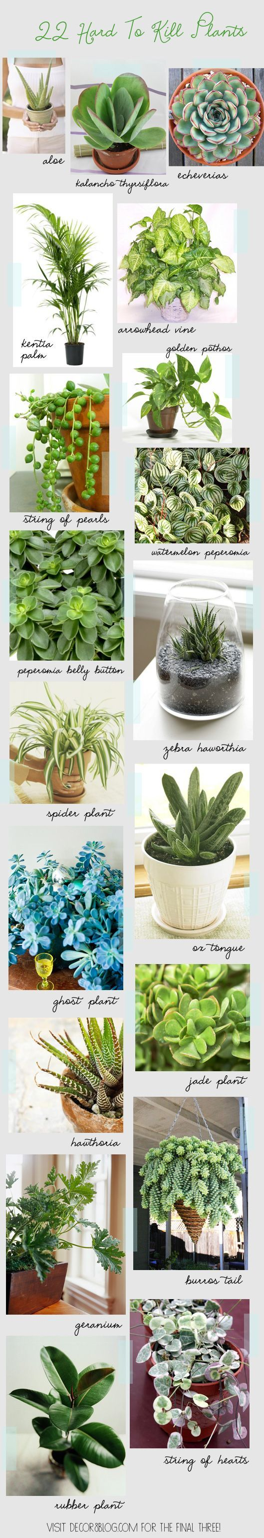 22 Hard To Kill Houseplants with links and if you visit decor8, you can see the remaining 3 plants not shown here: http://decor8blog.com/2014/01/16/22-hard-to-kill-houseplants/