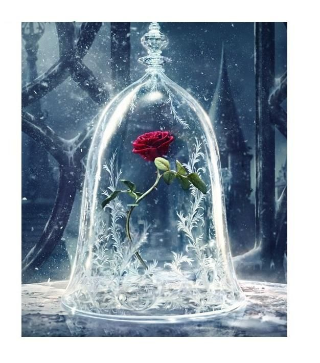 Best Beauty And The Beast Rose Easy 3D Diy Diamond Painting 640 x 480