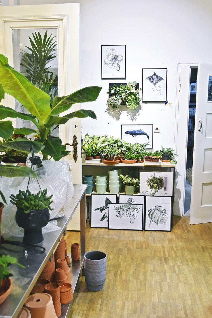 Hamburg Citytrip | Winkel van Sinkel - mein Hamburg Shopping Tipp für Urban Jungle Lovers | luziapimpinella.com