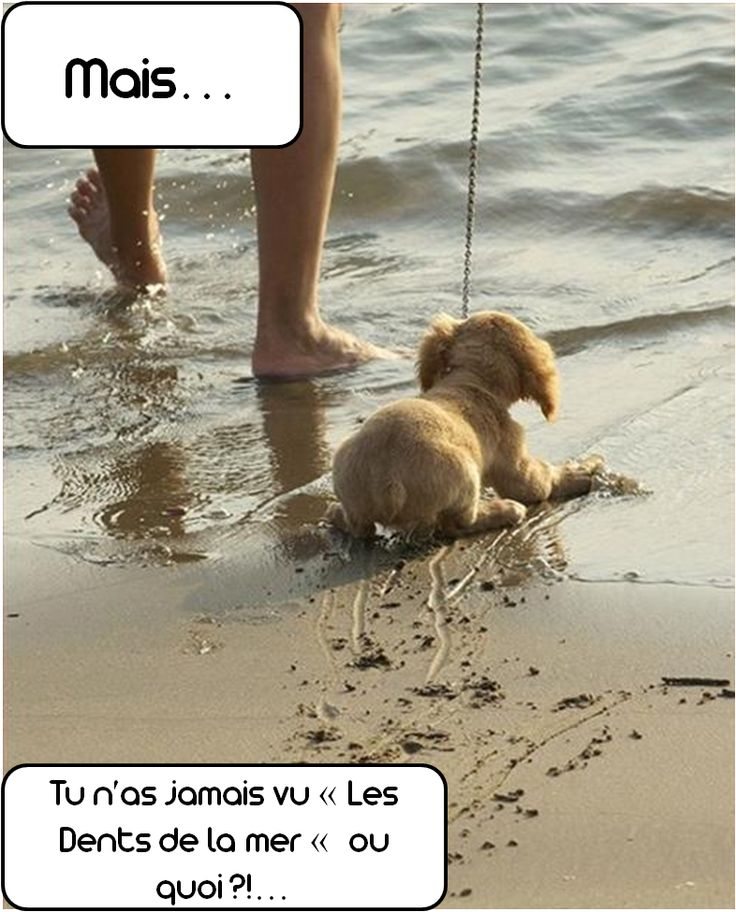 #jaws #dog #chien #zoomalia