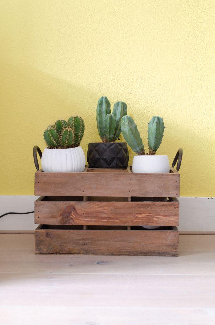 Binnenkijken bij cursist Renate.   #interieurcursus #interieurplan #woondromenwaarmaken #interieur #interieurstyling #okergeel #oker #cactus #planten #loveyourinteriorcursus #home #styling