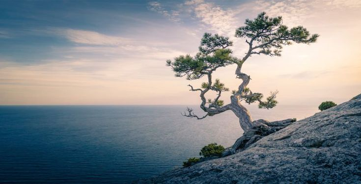 What is mindfulness exactly? How does it relate to meditation? How do you define mindfulness when someone asks you what it is? You'll find it all here.