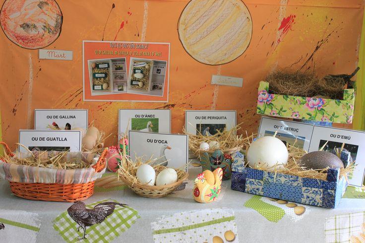Treballem els animals ovípars. El racó de les diferents classes d'ous a l'Escola del Far.
