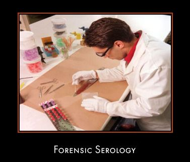 83 best f o r e n s i c s images on pinterest forensic science forensic serology information guide fandeluxe Gallery