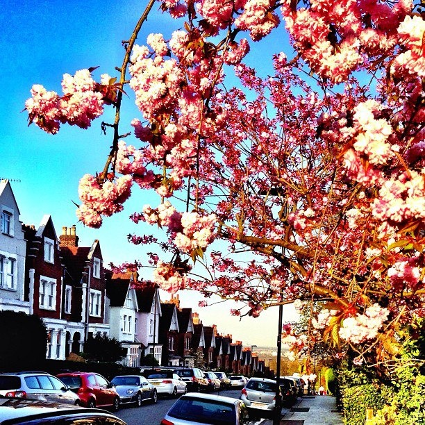 Spring in London! This pic was taken just opposite Highgate Wood (North London) looking over East London.   Photo by Shane (twitter: @shaneyp & instagram @shaneyp27)