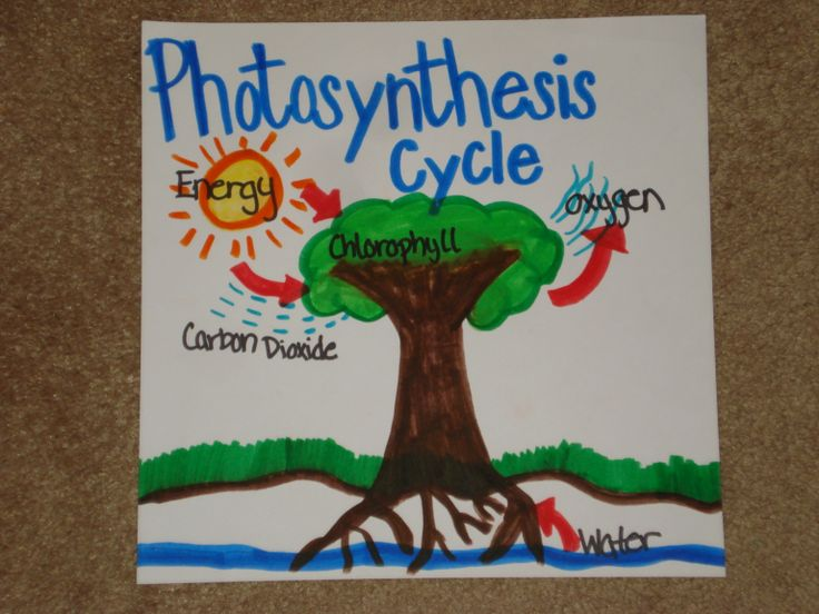 Photosynthesis Photosynthesis, Plant cell, Chlorophyll