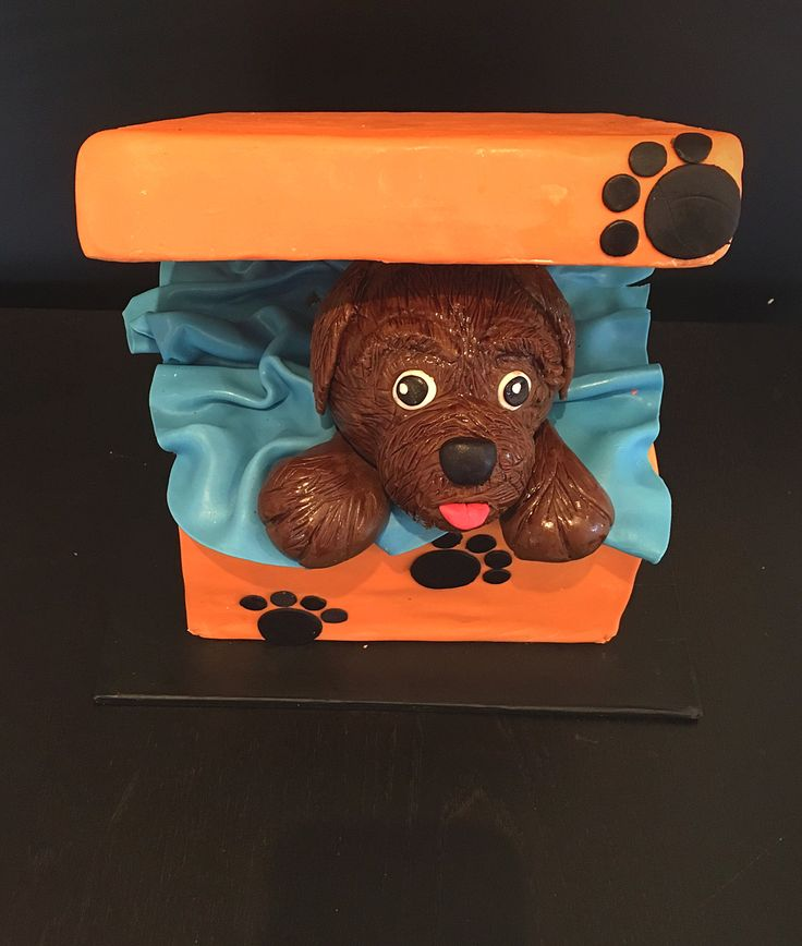 Puppy lovers birthday cake. A Cavoodle pup in a box.