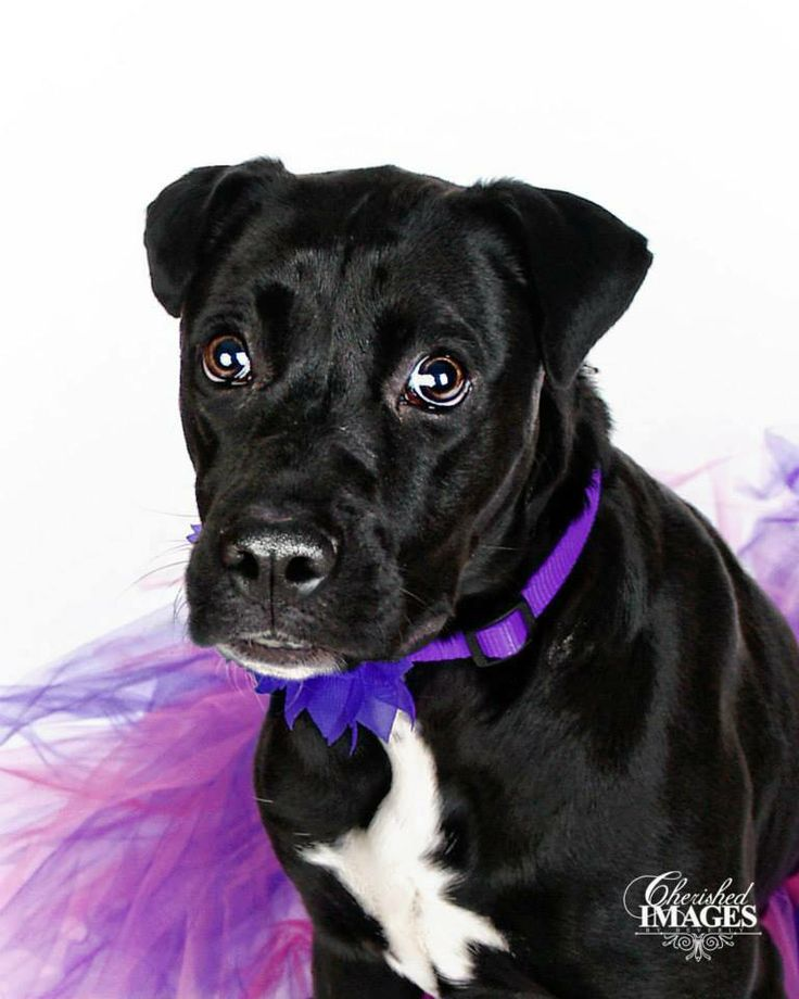 This cutie is available for adoption from Paws Up Nebraska