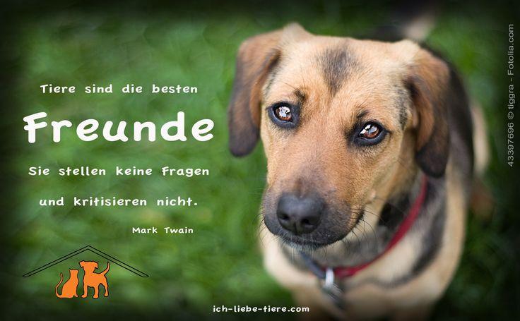 Tiere sind die besten Freunde. Sie stellen keine Fragen und kritisieren nicht.  http://www.ich-liebe-tiere.com/